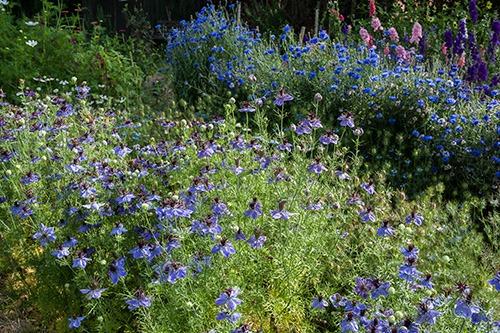 British grown garden flowers