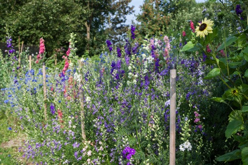 Sustainably grown flowers