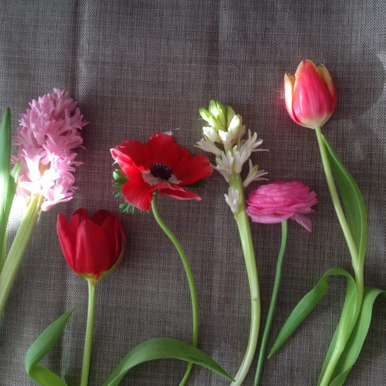 British red pink spring flowers